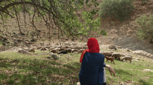 shepherd in iran
