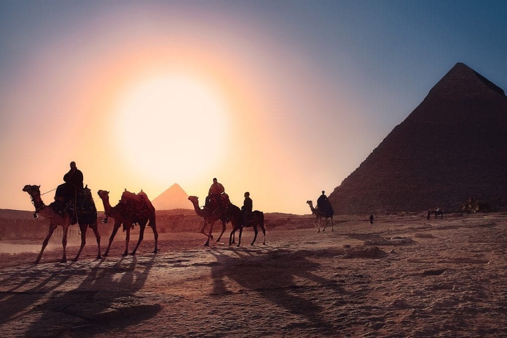Cairo camels sunset